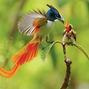 Beautiful-Bird-of-Paradise-Photo-Wallpaper